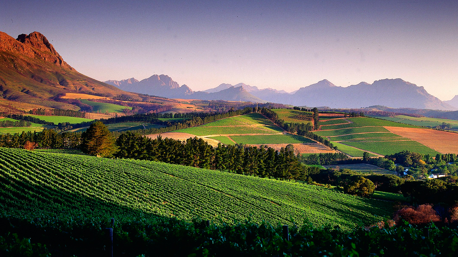15 south african white wine values tasting highlights for Jardin wine south africa