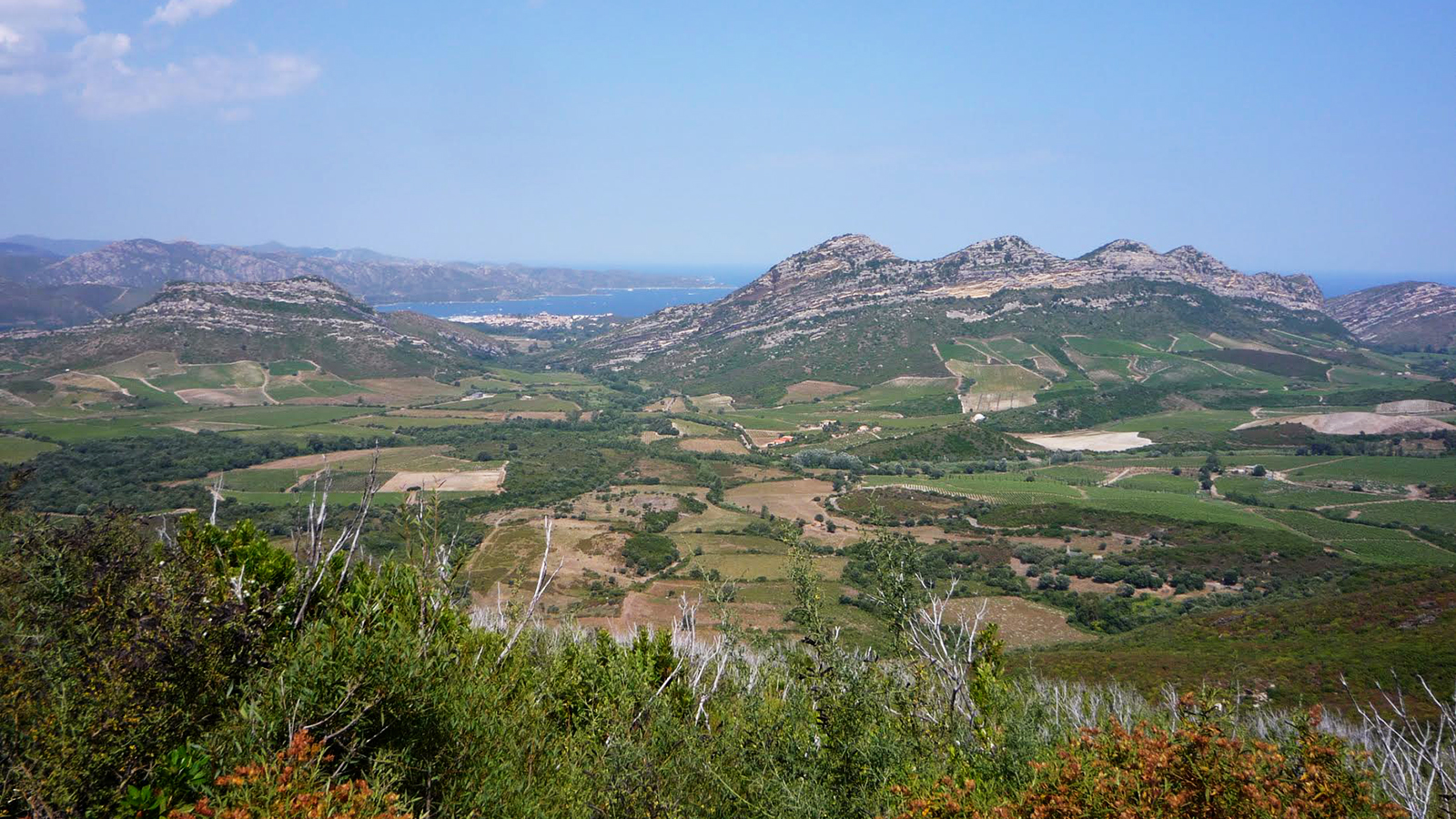 Wine Refrigerator Reviews Wine Spectator 12 lively wines from corsica | tasting highlights | news
