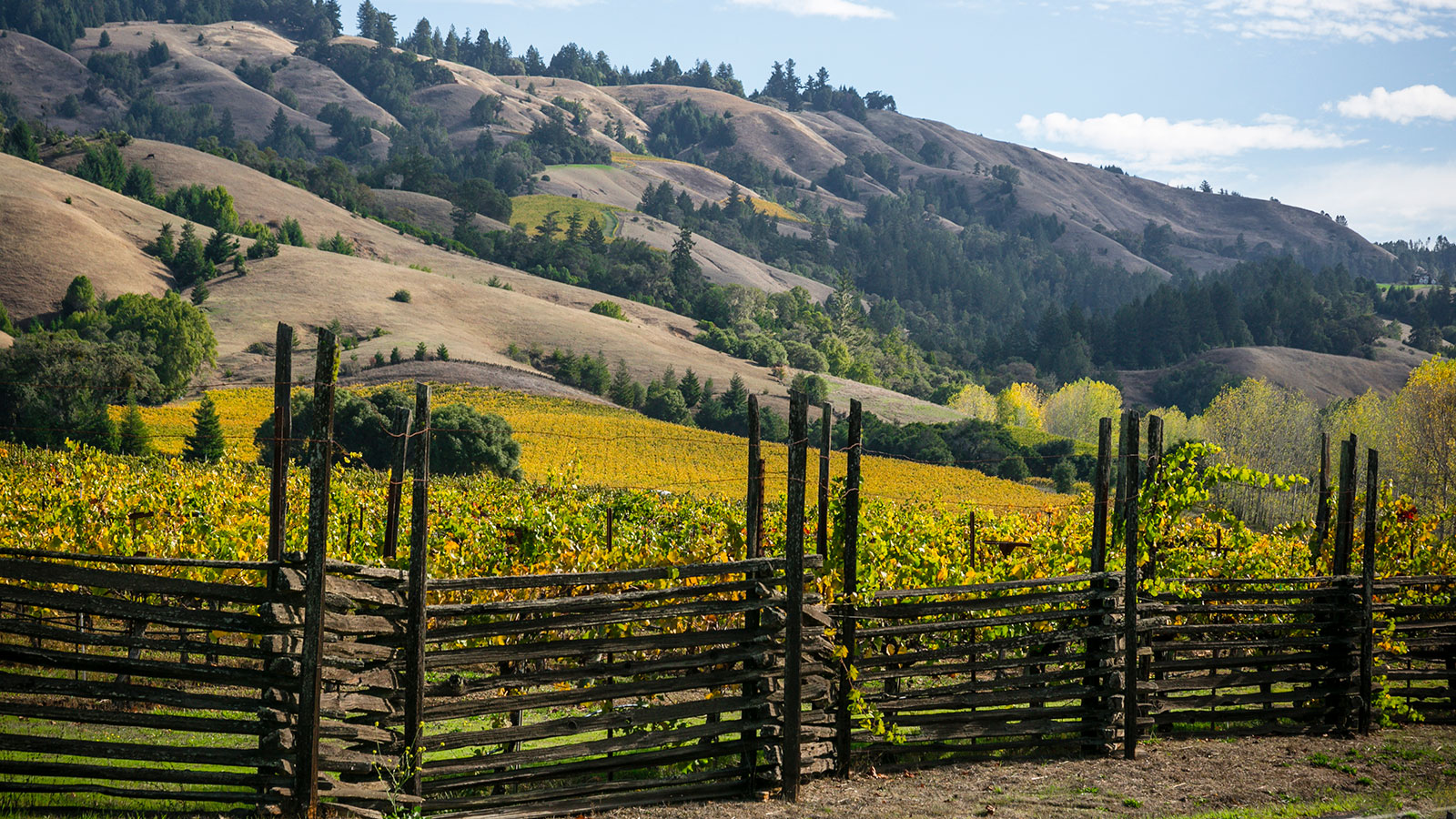 Wine Refrigerator Reviews Wine Spectator 14 california white wines not to overlook | tasting highlights