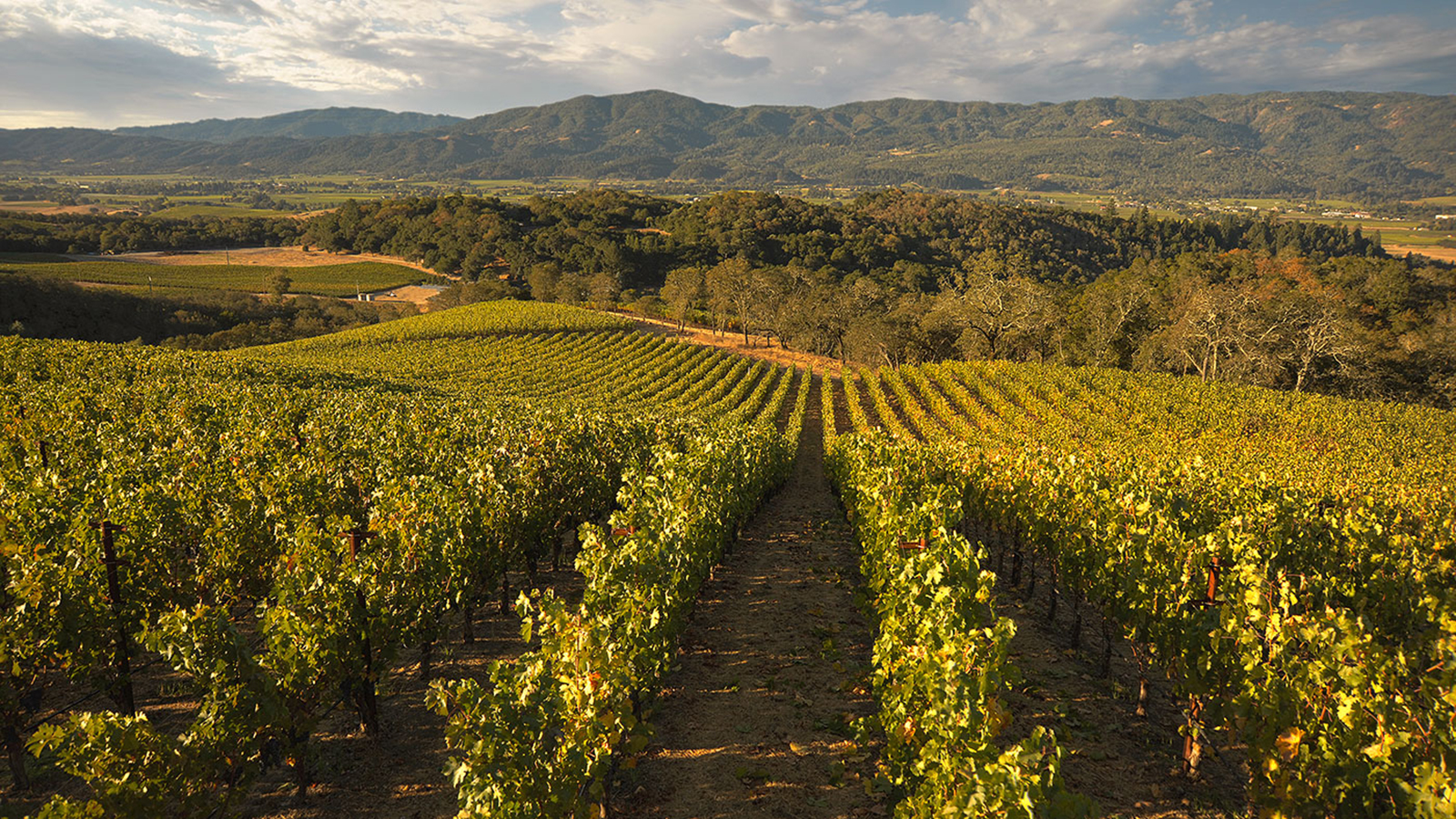 Wine Refrigerator Reviews Wine Spectator 12 rock star merlot wines from california | tasting highlights