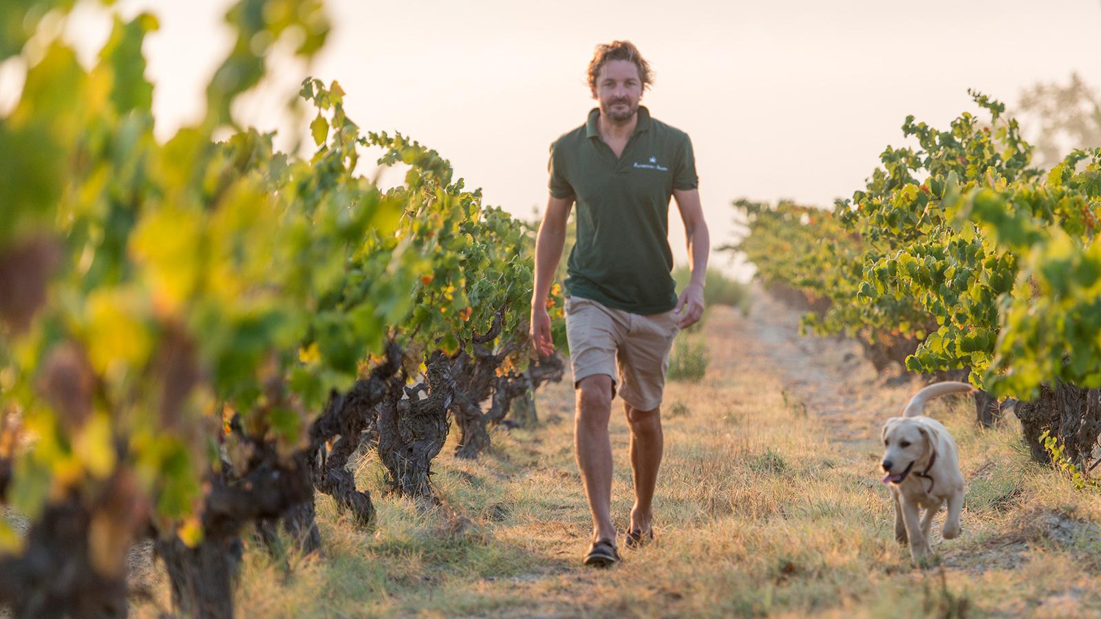 Wine Refrigerator Reviews Wine Spectator 15 sparkling wines for everyday enjoyment | tasting highlights